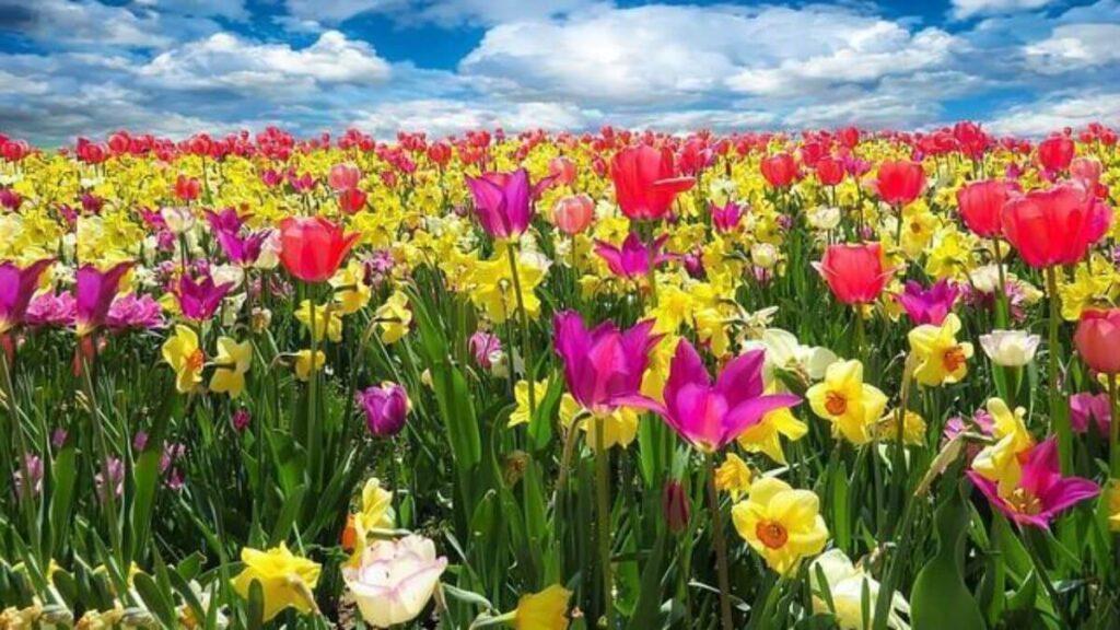 Qual o significado das cores das flores? | Flora Horizonte