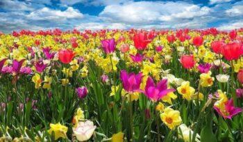 Qual o significado das cores das flores?   Flora Horizonte