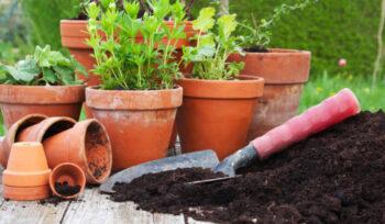 Como a jardinagem melhora o bem-estar?   Flora Horizonte