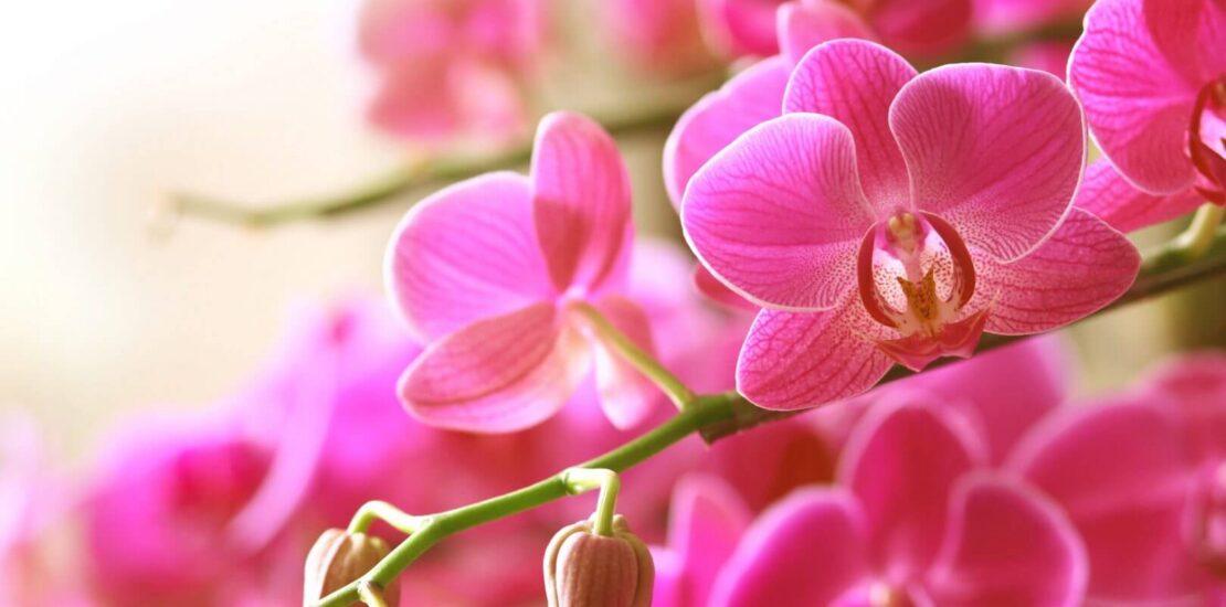Confira dicas de flores para o Dia dos Pais | Flora Horizonte