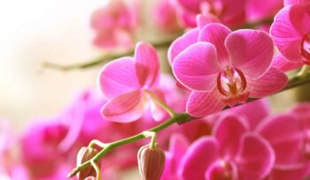 Confira dicas de flores para o Dia dos Pais   Flora Horizonte