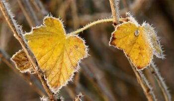 Como cuidar das plantas no inverno?   Flora Horizonte