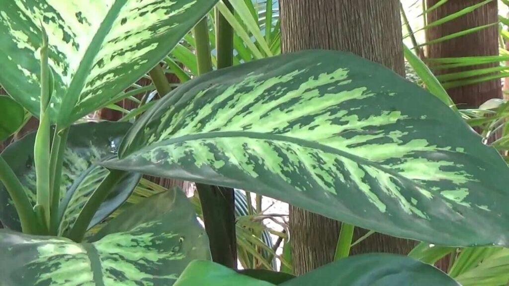 Plantas de jardim venenosas para animais | Flora Horizonte